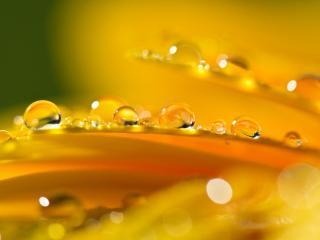 обои Капли росы на желтом цветке фото