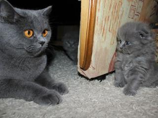 обои Мама и сынок фото
