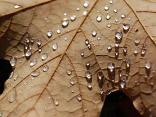 обои Сухой лист в каплях росы фото