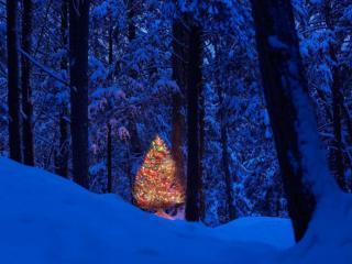 обои В сказочном лесу фото