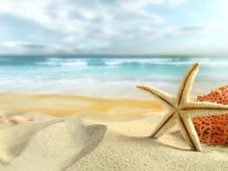 обои Морская звезда и коралл на пляже фото
