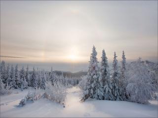 обои Зимнее утро морозное в лесу фото