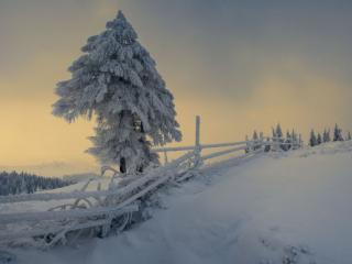 обои Зимняя сказка вечерняя фото
