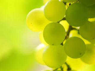 обои Солнечный виноград фото