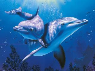 обои Парочка дельфинов фото