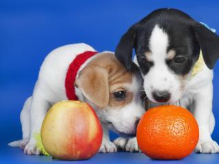 обои Щенки и фрукты фото