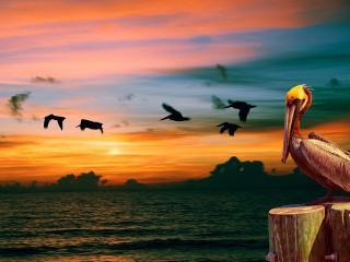 обои Пеликан на фоне утренней зари фото