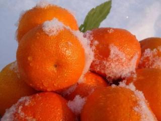 обои Мандаринки в снегу фото