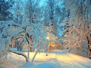 обои Зимний вечер и дорога фото