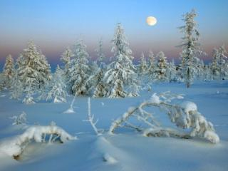 обои Зимняя сказка в лесу фото