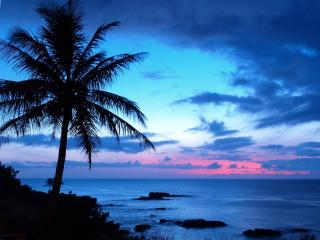 обои Пальма,   море и закат фото