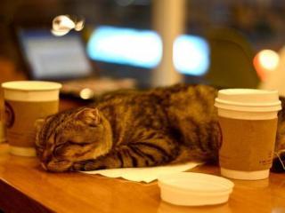 обои Парижское кафе с кошками фото