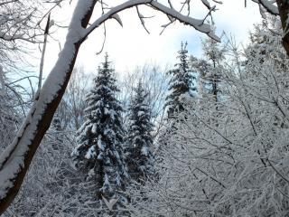 обои Чёрно-белая зима в лесу фото
