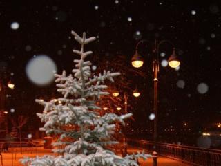 обои Снег,   фонарь и ёлка фото