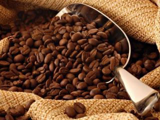 обои Кофейные зёрна с блестящим совком фото