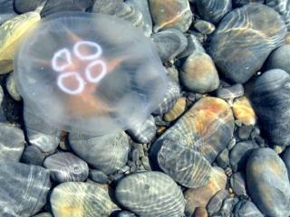 обои Каменистое морское дно фото