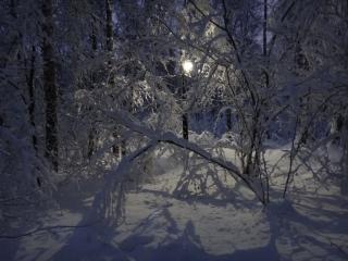 обои Зимняя ночь в лесу фото