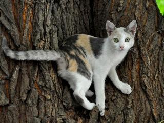 обои Кошечка на дереве фото