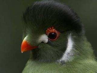 обои Птичка с тёмной головкой фото