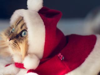 обои Кот под Новый год фото