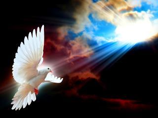обои Птица мира фото