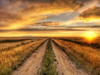 обои Дорога под золотистым небом фото