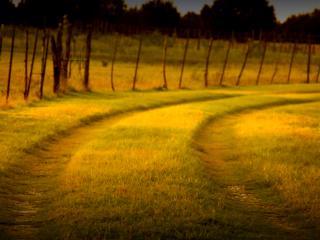 обои для рабочего стола: Колея дороги залитая вечерним светом солнца