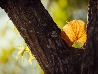обои Осенний лист между ветвей дерева фото
