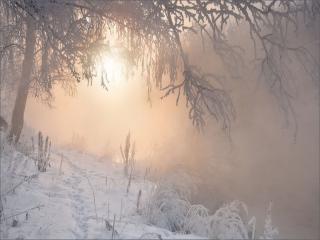 обои Утро зимнее,   утро туманное фото