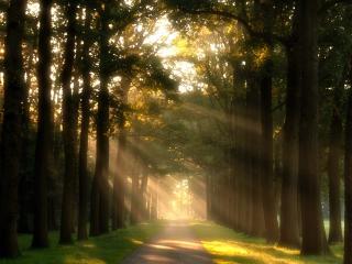 обои Дорога в лесных проблесках солнца фото
