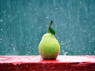 обои Плод груши под дождём фото
