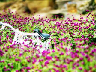 обои Лето,   цветы,   велосипед фото