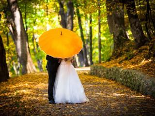 обои Молодожены в парке под зонтом,   свадьба фото