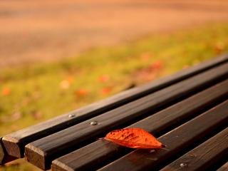обои Осень в парке,   скамейка фото