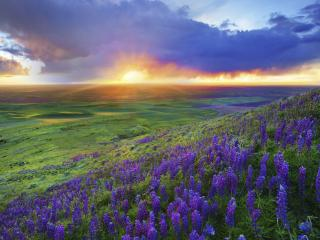 обои Панорамный вид зеленых просторов,   на закате фото