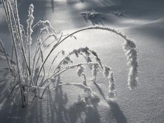 обои Искристая зима фото