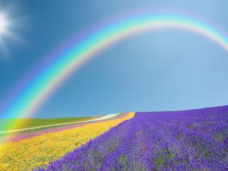 обои Солнце и радуга над полями фото