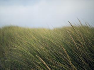 обои Густая высокая трава под голубым пасмурным небом фото