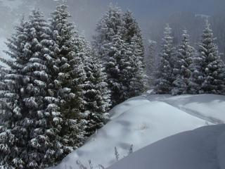 обои Околдованный лес фото