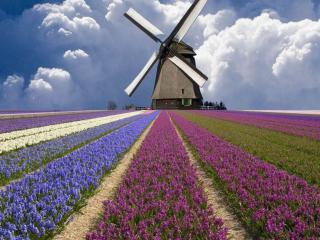 обои Разноцветные поля Нидерландов фото