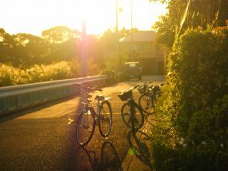 обои Велосипеды в вечернем свете солнца,    на стоянке фото