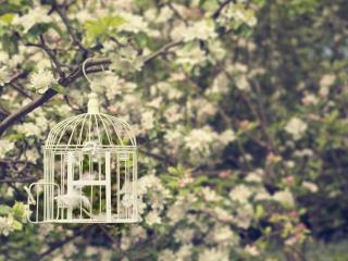 обои Весна,   цветущее дерево,   клетка фото