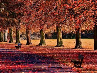 обои Осенняя аллея парка,   вдоль ряда деревьев фото