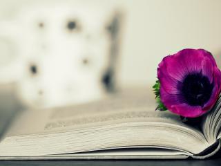 обои Открытая книга и сиреневый цветок фото