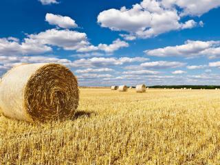 обои Поле и стоги сена под облачным небом фото