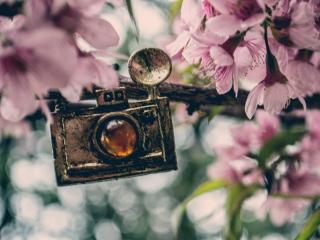 обои для рабочего стола: Ретро фотоаппарат на цветущей ветке
