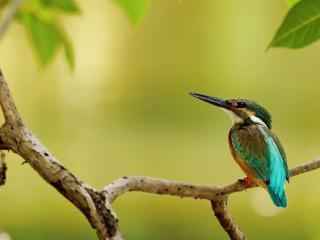 обои Маленькая птичка с длинным клювом фото