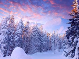 обои Снежные ели перед горой фото