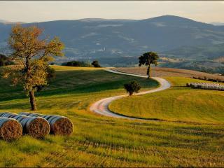 обои Дорога в ухоженном поле со скошенной травой фото