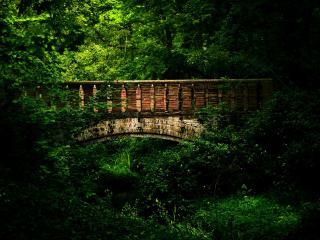 обои Старый мост в зеленых зарослях фото